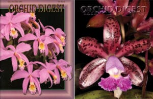 Special 2 Cattleya issue 794684