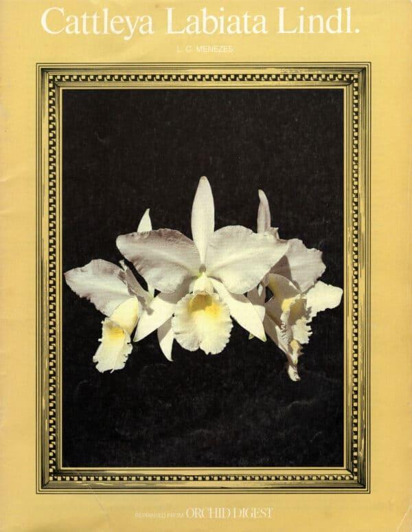 Cattleya labiata Lindl. By Lou Meneze 51-3